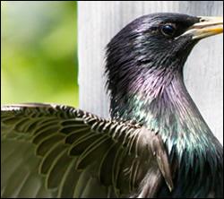 bird removal University Park