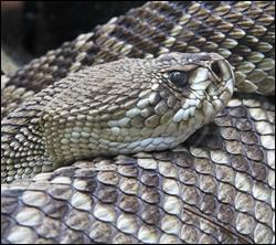 snake removal University Park